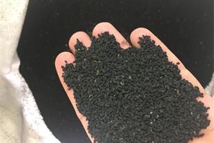 سیاه دانه هندی