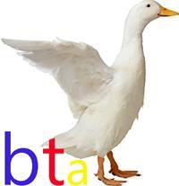فروش اردک