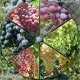 فروش انواع نهال انگور