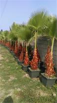 تولید و فروش گل و گیاه