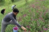 آموزش کاشت و پرورش گیاهان دارویی