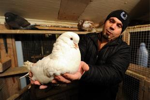 آموزش مدیریت پرورش کبوتر گوشتی و زینتی