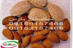بذر بادام تلخ ، قیمت بذر بادام تلخ ، نهالستان پارس