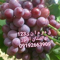 فروش انواع ارقام خارجی و داخلی نهال انگور
