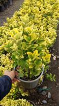 پرورش و تولید گیاه بیرونی , گیاه فضای باز