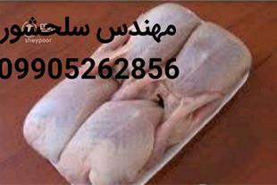 گوشت گرم کبک .مهندس سلحشور09905262856