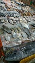 خریدار عمده ماهی قزل آلا و سالمون