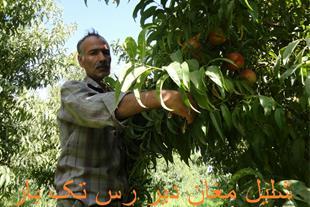 نهالستان هادی فلاح