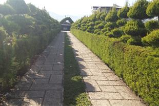 طراحی فضای سبز ، باغچه کاری ، فروش گل و گیاه
