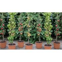 احداث باغ میوه،احداث باغ گردو،باغ انگور