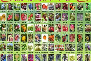 نهالفروشی پارس،فروش نهال میوه پیوندی