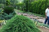 باغچه کاری و طراحی و فضای سبز ویلا