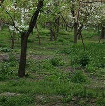 700متر باغ گیلاس در طرقبه