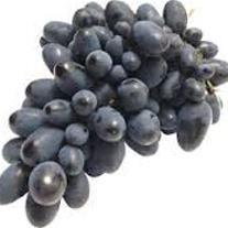 فروش نهال انگور
