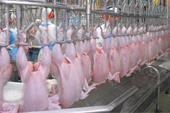 مرغ منجمد صادراتی