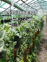 فروش ، تولید گل و گیاه پیوندی و فضای باز شمال