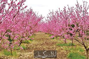 باغ و باغچه در شهریار کد 1552