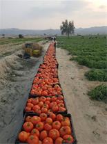 جویای کار در زمینه کود و سموم کشاورزی