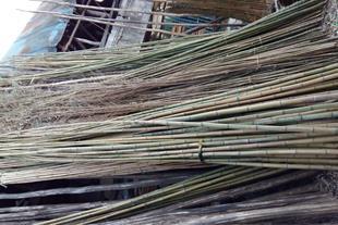 فروش چوب نی خیزران (چوب بامبو)برای قیم درختان