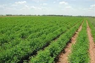 فروش 50 هکتار زمین کشاورزی با دامداری سنددار قزوین