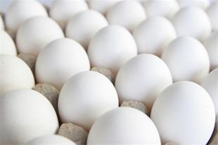 خریدار تخم مرغ