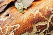 سمپاشی موریانه تخصصی تضمینی پاک مهر نصف جهان