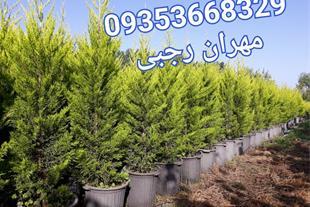 تولید و فروش گل و گیاه ، تولید نهال و گل آپارتمانی