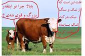 خرید نمک دامداری مخصوص صنایع دام و طیور تولید جدید