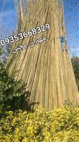 فروش چوب بامبو ساخت آلاچیق و دکور