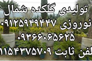 نمایندگی فروش گل و گیاه