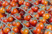 فروش گوجه همرس