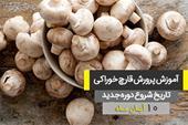 Mushroom breeding in Isfahan