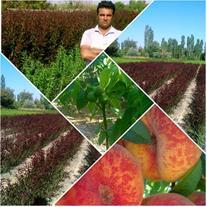 تولید و فروش نهال در نهالستان برتر آذربایجان