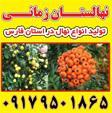 انواع نهال انگور در شیراز