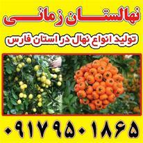 فروش انواع نهال پرتقال در شیراز