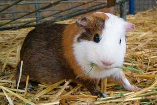 حیوانات خانگی متنوع بهداشتی ولوازم!