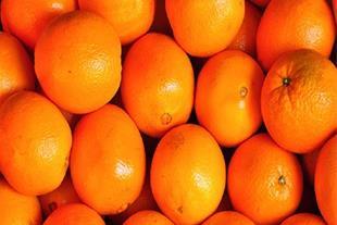 فروش پرتقال تامسون درجه یک