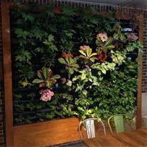 طراحی و اجرای تخصصی روف گاردن ،بام سبز ، دیوار سبز