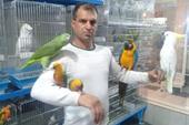 خرید و فروش پرندگان زینتی سخنگو رام دستی