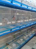 فروش انواع پرندگان طوطی سنان چهار پایان