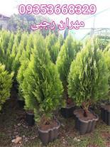 گل و گیاه برای حیاط سازی و ویلا ( طراحی فضای سبز )