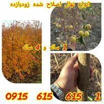 نهال و درخت مثمر و زینتی یک و چهار ساله