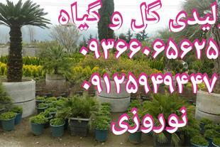 فروش گل و گیاه باغچه ، محوطه و حیاط