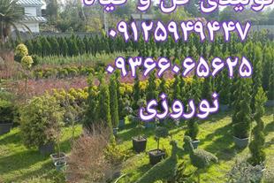 فروش گل و گیاه خرید گل و گیاه ارزان