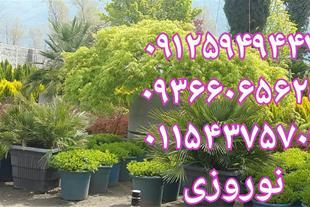 هرس و باغچه کاری و فروش گل و گیاه