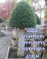 سفارش و فروش گل و گیاه مناسب ویلا