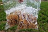 Sale of mushrooms and seeds of Ganoderma