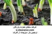 ترخیص بذر سبزیجات از گمرک