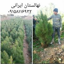 تولید انواع نهال گل و گیاه مهندس ایرانی