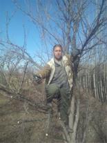 هرس کاری درختان میوه